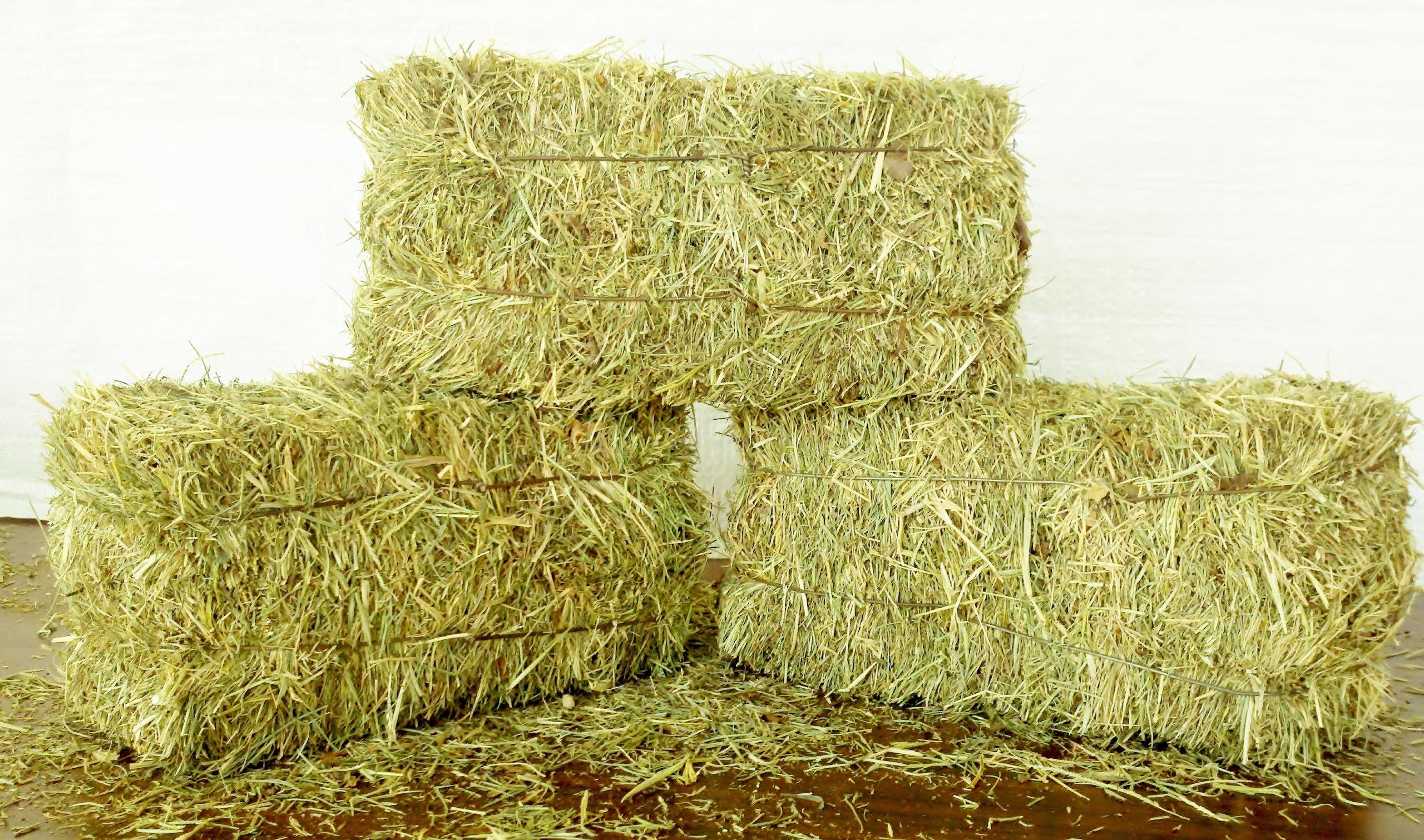 saturday hay we re open early staheli family farm washington utah